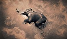 壮大なる叙情詩。世界を巡り動物と人間の交流を収めた写真シリーズ「Ashes and Snow」