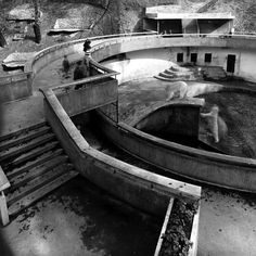 The 12 Lubetkin-designed concrete structures at Dudley Zoo, built between 1936 and are the greatest collection of surviving Tectons in the world. Zoo Pictures, Zoo Photos, Concrete Structure, Wolverhampton, Concrete Design, Animal House, Birmingham, Old World, Conservation