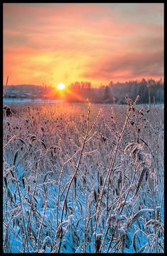 Winter by Samuli Sivonen. Looks like South Dakota, but it is Finland.Winter by Samuli Sivonen. Looks like South Dakota, but it is Finland. Beautiful Sunset, Beautiful World, Beautiful Places, Beautiful Pictures, Beautiful Flowers, Snow Scenes, Winter Scenes, Foto Art, Winter Beauty