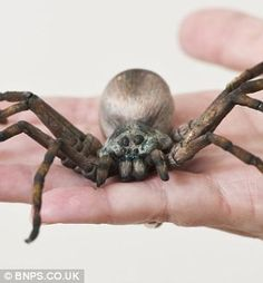 edible arachnid by Cake-maker Cecilia Chalmers