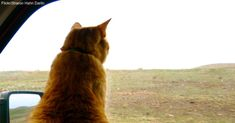 11 Tips for Successful Cat and Human Adventuring!