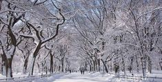 Snow on the Mall, Central Park, NY, NY