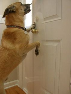The CLAWGUARD   The Ultimate Door Scratch Shield   Door And Frame  Protection. Dog Scratching