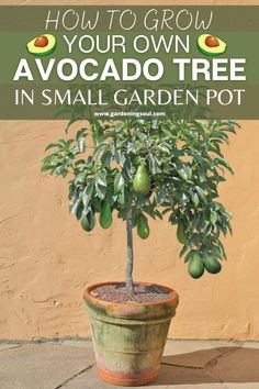 Small Garden Pots, Garden Yard Ideas, Veg Garden, Garden Items, Backyard Projects, Indoor Garden, Garden Plants, House Plants, Growing Avacado Tree