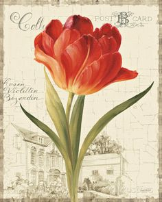 Garden View III - Red Tulip Posters by Lisa Audit at AllPosters.com