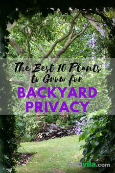 Keep The Secret Garden Hidden secret garden The Best 10 Plants to Grow for Backyard Privacy Natural Privacy Fences, Natural Fence, Outdoor Privacy, Hedges For Privacy, The Secret Garden, Hidden Garden, Secret Gardens, Privacy Plants, Privacy Landscaping