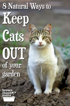 Little Garden Design Cats using your garden as a litterbox? Here are 8 natural ways to keep cats out of your garden--plus 4 dangerous methods you should never use. Growing Herbs, Growing Vegetables, Growing Tomatoes, Cat Repellant Outdoor, Garden Pests, Garden Tools, Organic Vegetables, Autumn Garden, Gardening For Beginners