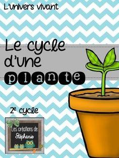 { Projet de sciences } Le cycle d'une plante (2e cycle)