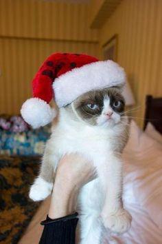 Grumpy Cat Christmas Blank Meme Template
