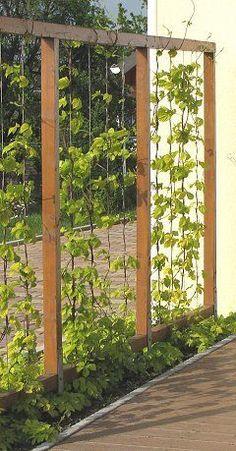 Trellis frame with U-shaped wire ropes. Trellis frame with U-shaped wire ropes - Innen Garten - Eng Back Gardens, Outdoor Gardens, Small Gardens, Garden Trellis, Fence Garden, Garden Mesh, Garden Privacy Screen, Wire Trellis, Rocks Garden