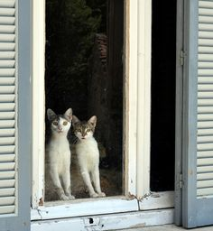 Cats and windows...