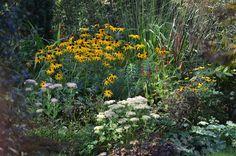 *Garten-Liebe*: Herbstfreude und Matrona...