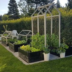 6 Loving Tips AND Tricks: Front Yard Vegetable Garden Food vegetable garden kids growing plants.Vegetable Garden Tips How To Build vegetable garden inspiration raised beds.Home Vegetable Garden Fruit Trees. Backyard Vegetable Gardens, Potager Garden, Veg Garden, Vegetable Garden Design, Garden Beds, Outdoor Gardens, Allotment Gardening, Small Yard Vegetable Garden Ideas, Small Garden Spaces