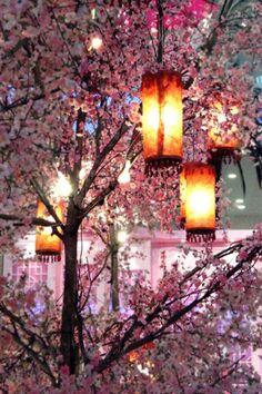 Beautiful cherry blossom tree with hanging lanterns