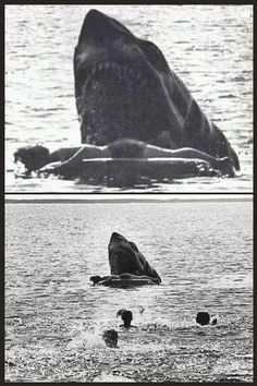 Cut scene from Jaws - what the Kitner death was originally intended to be. No footage exists but this still is nightmare fuel. Jaws Film, Jaws Movie, Jaws 2, Cthulhu, Le Kraken, Shark Pictures, Funny Pictures, Megalodon, Classic Monsters