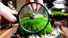 I am so in love with terrariums! A little eco-village in a jar!