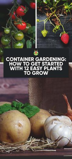 Container Gardening: How to Get Started with 12 Easy Plants to Grow