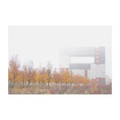 #madrid #spain #niebla #fog #minimal #autumn #otoño #edificiomirador #building #arboles #trees #igersspain #igers #ig #igersmadrid #photography #photooftheday #picoftheday #december