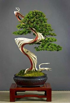 ☼♦What do you think about this pretty #bonsai tree?☼☺ #BonsaiInspiration #bonsaitrees