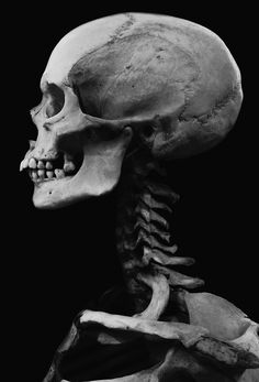 Find images and videos about black & white, skull and bones on We Heart It - the app to get lost in what you love. Skull Anatomy, Skeleton Anatomy, Skull Reference, Anatomy Reference, Drawing Reference, Human Skeleton, Human Skull, Skeleton Bones, Wow Photo