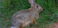 Easy Gardener Deer & Rabbit Repellent | Another repellent for rabbits:  Wip a raw egg with a quart of water.  Whip and whip to a big froth.  Spray on plants.  Squirrel and rabbit repellent.