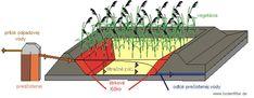 Koreňová čistička odpadových vôd :: bzovikdp Eos
