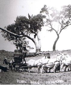Boy carting water from Town well, Isisford with his Billy goat team