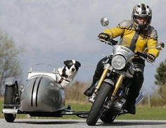 Vintage Motorcycles Classic This picture is brilliant! Having fun while you enjoy your ride on this Norton. Vintage Motorcycles, Custom Motorcycles, Custom Bikes, Cars And Motorcycles, Custom Vans, Moto Scooter, Best Scooter, Bike Style, Motorcycle Style