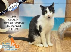 Timeline Photos - Urgent Cats of Broward