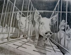 """by Jo Frederiks """"Cruelty to powerless animals has become so egregious, I dont think that any decent human being can any longer be passivesitting on a fence is for cowards and crows."""" ~Phillip Wollen"""