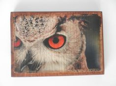 Owl wall decor Nature photography photo transfer by HearttoCraft