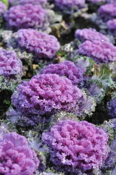 7 Ways to Prep Your Yard for Fall - #5 update your container pots- ornamental cabbage Family Focus Blog