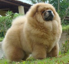 .....now that is one fluffy dog!!