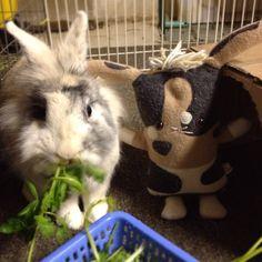 Peanut butter and flat butter bonnie #bunnies