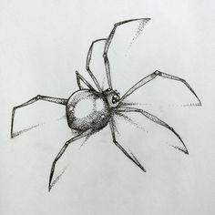 Spider Drawing, Spider Tattoo, Drawing For Beginners, Pen Drawings, Design Patterns, Tattoo Designs, Tatoo, Insects, Wild Animals