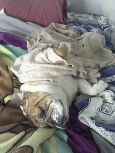 Life is good ---- when you have ALL the blankets and the bed to yourself!