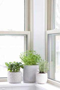 Huerto aromático en la cocina Herb Garden In Kitchen, Kitchen Plants, Diy Herb Garden, Herb Garden Design, Garden Plants, Window Seal Herb Garden, Shade Garden, Plants In Kitchen, Garden Totems