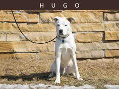 Hugo (A674442)