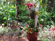 The finished bromeliad tree - a nice addition in the yard.