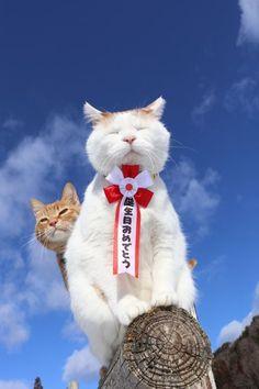 誕生日おめでとう - かご猫 Blog Happy Birthday Animals, Happy Birthday Wishes, Funny Animal Memes, Funny Animals, I Love Cats, Cute Cats, Harry Birthday, Stupid Cat, Cute Baby Animals