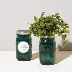 Green Recycling, Silver In The City, Best Vitamin C, Quart Mason Jars, Grow Kit, Hydroponics System, Indoor Planters, Self Watering, Recycled Glass