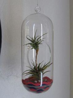 Fun Dr Suess look alike Tillandsia Creature. Hanging Terrarium. All of my designs are for sale.