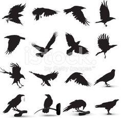 Raven Silhouette royalty-free stock vector art