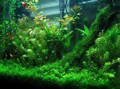Аквариумные растения - основные принципы и правила подбора и высадки аквариумных растений