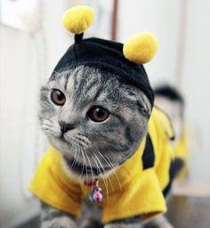 Concurso Sonrisas de gato: La foto más divertida