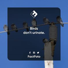 #factfoto #fact #facts #bird #birds #urinating