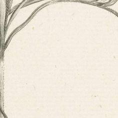 Ixia, Abraham Delfos, van Hazen, 1741 - 1820 - flowers-Verzameld werk van Barbel - Alle Rijksstudio's - Rijksstudio - Rijksmuseum
