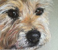 A pastel painting of Lily a Border Terrier Cross. Pastel Drawing, Pastel Art, Painting & Drawing, Watercolor Animals, Watercolor Art, Norwich Terrier, Cairn Terriers, Border Terrier, Dog Portraits