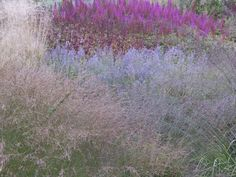 piet oudolf russian sage - Google Search