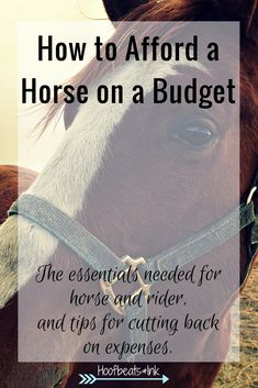How to afford a horse on a budget. The essentials needed for horse and rider, and tips for cutting back on expenses. via Hoofbeats and Ink